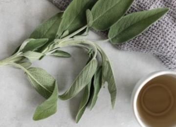 Подробно про чай из шалфея