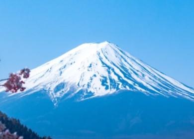 Удивите своих гостей необычным зелёным чаем «Японская липа»!