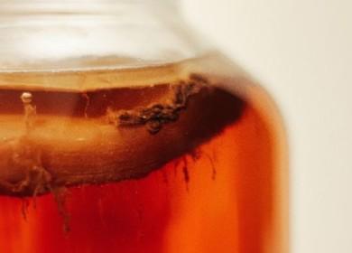 Знаете ли Вы, как сохранить чайный гриб при длительном отсутствии дома, где и в какой температуре его держать?